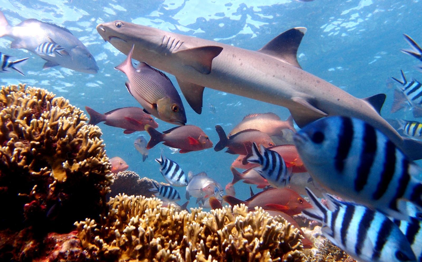 海洋生態系を保つ重要な役割を果たすフィジーのサメ